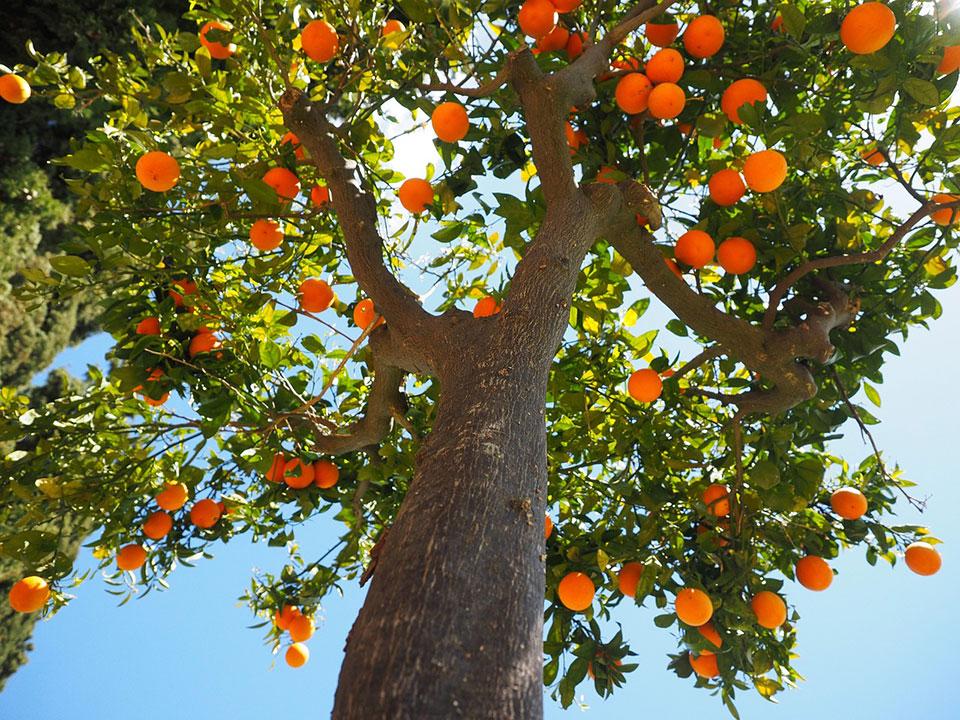 albero frutta brescia