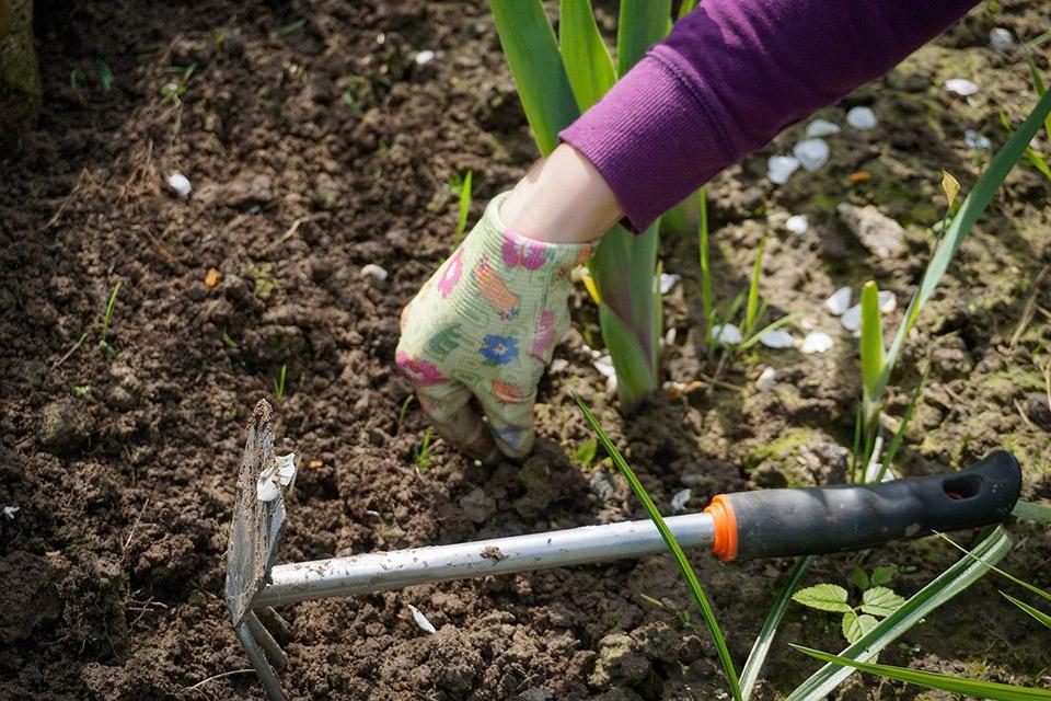 come piantare in giardino o in vaso