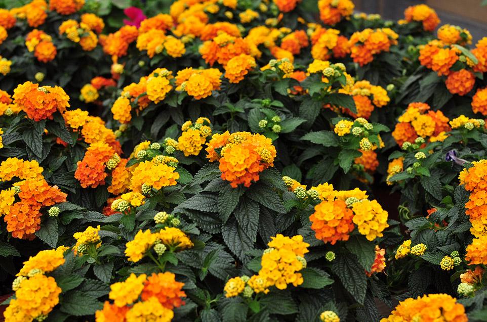 stagionali teoria dei colori piante e fiori