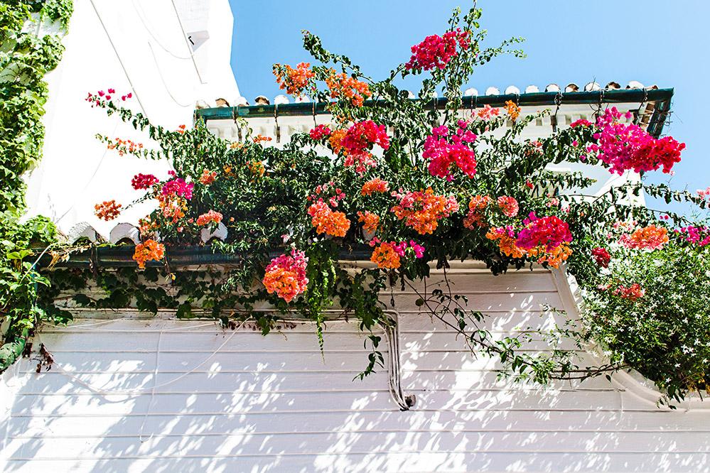 allestimenti per eventi piante e fiori per terrazze
