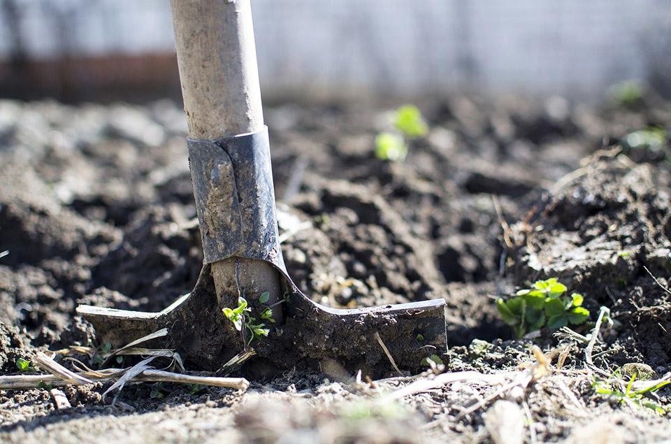 arricchire il terreno con letame o compost